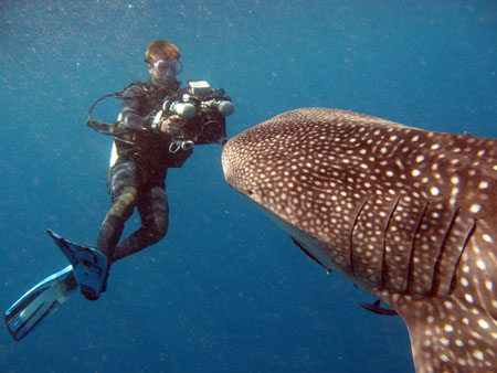 Nick Hope with whale shark